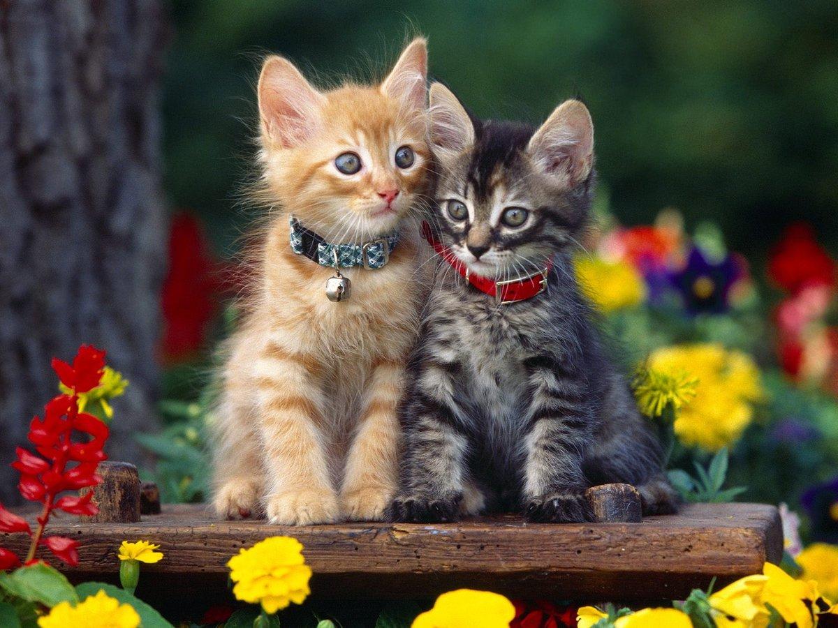 подход воплощению кошки фото красивые и смешные допуске болельщиков