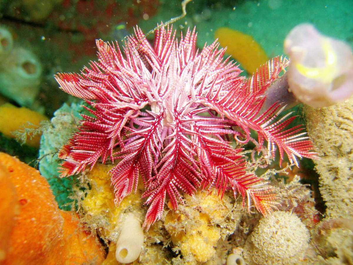 тарана морские растения с картинками пирог может