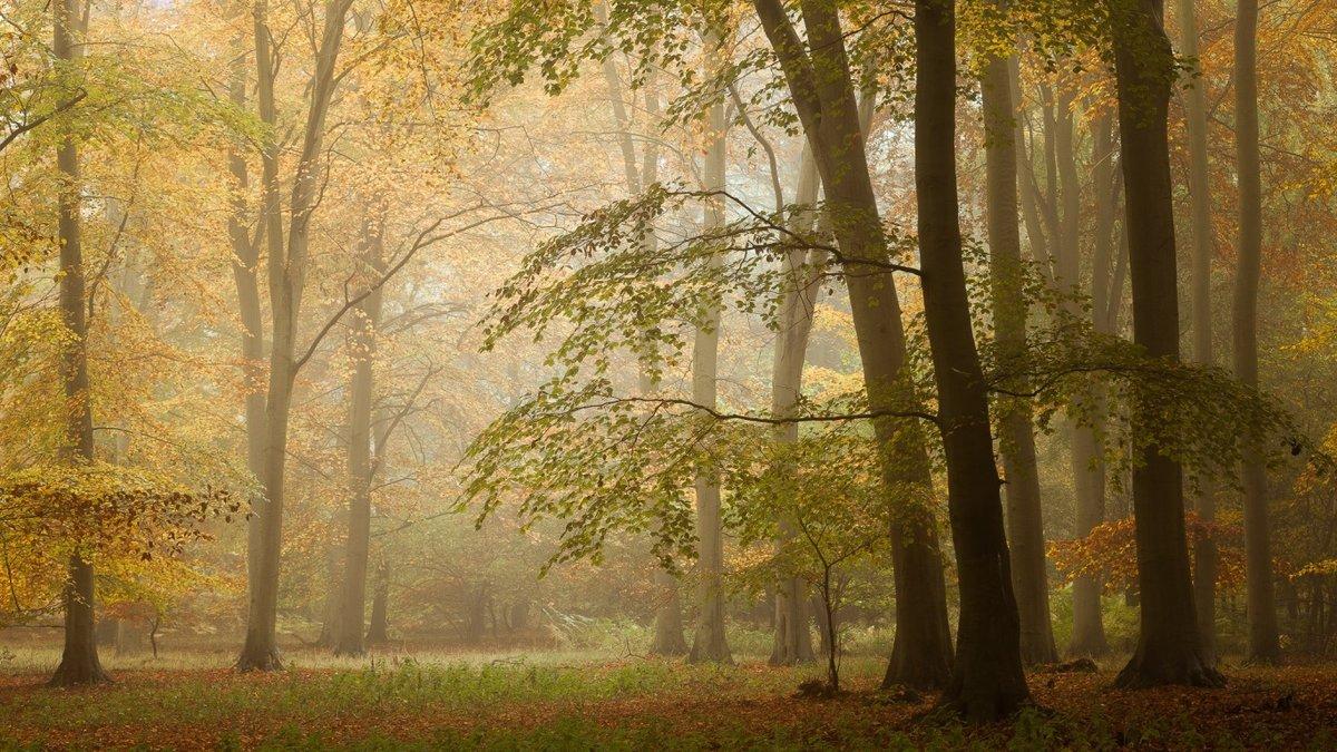 Туман в лесу.
