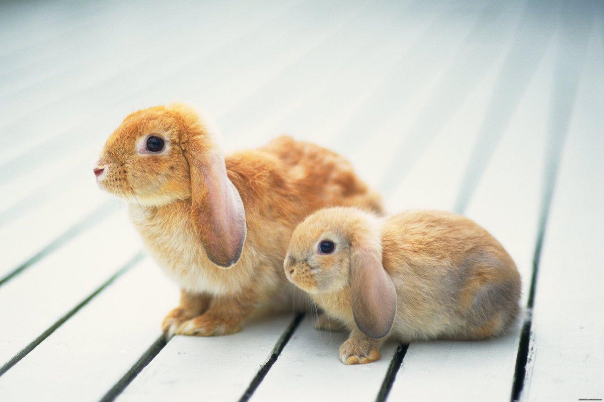 Cute Rabbits Wallpaper Rabit Images Of Bunny