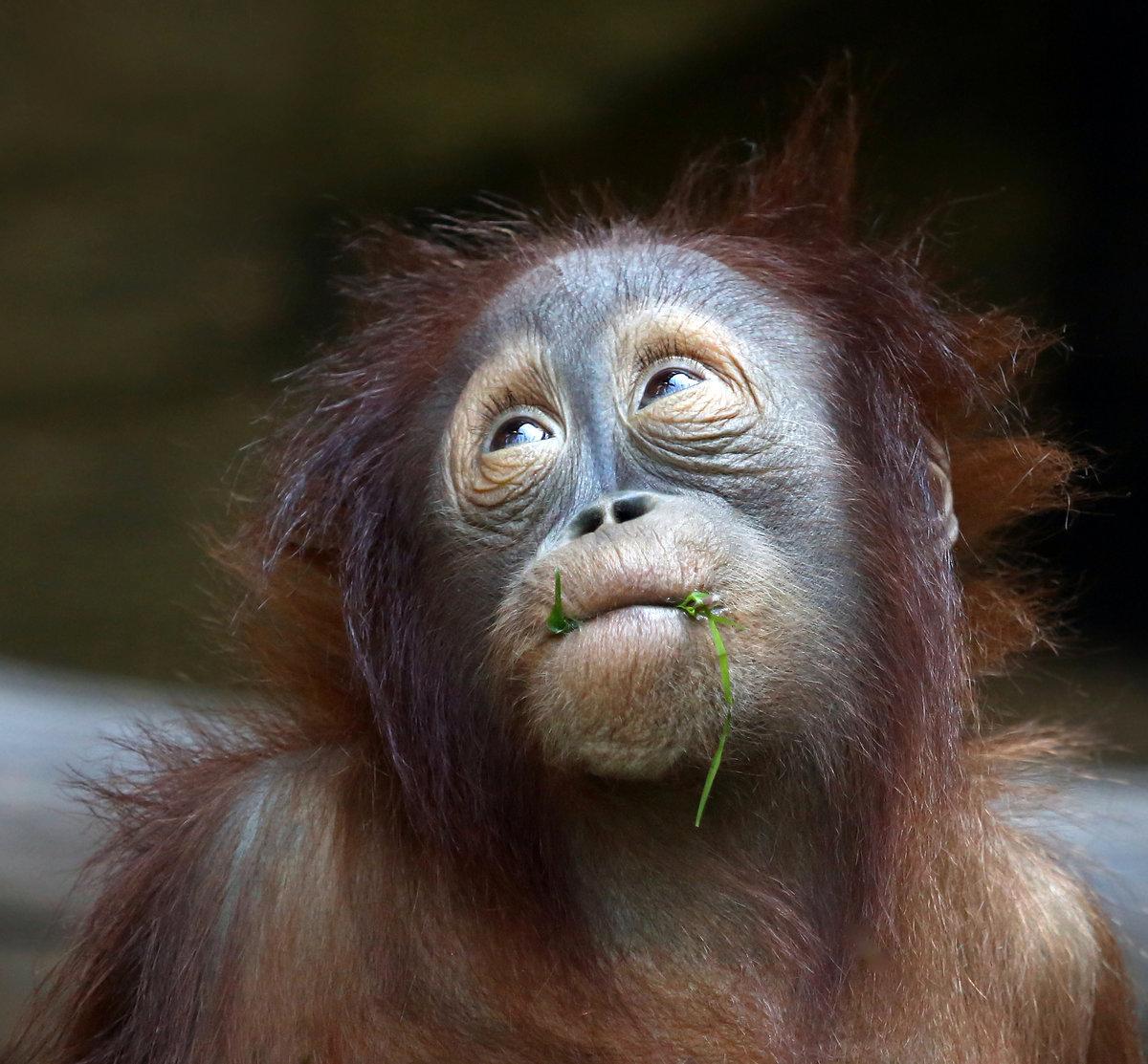 Прикольные картинки эмоции животных