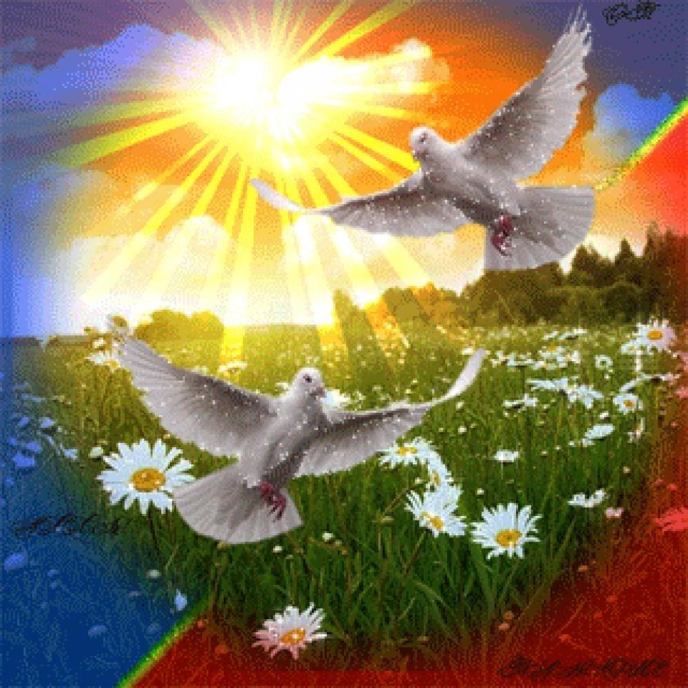 Надписями любимому, анимашки голуби в небе