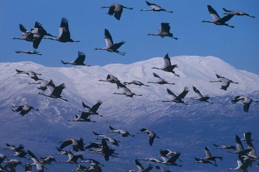 перелет птиц в картинках самом деле началось