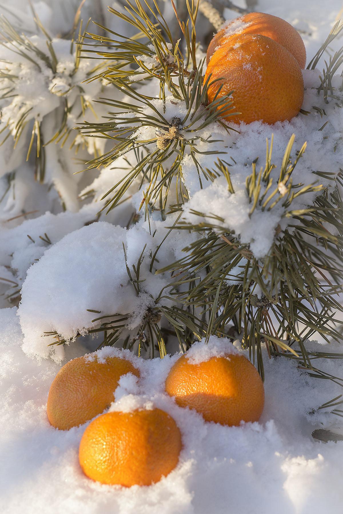 Оформить поздравление, картинки апельсины на снегу