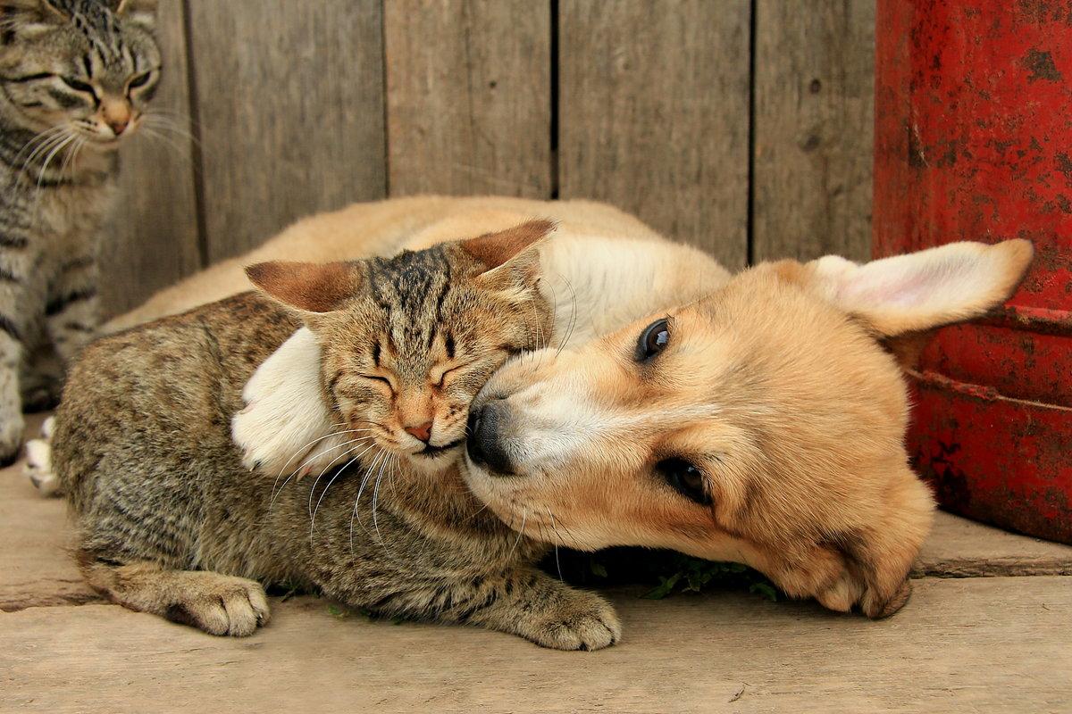 Прикольные животные картинки кошки и собаки, именем дима