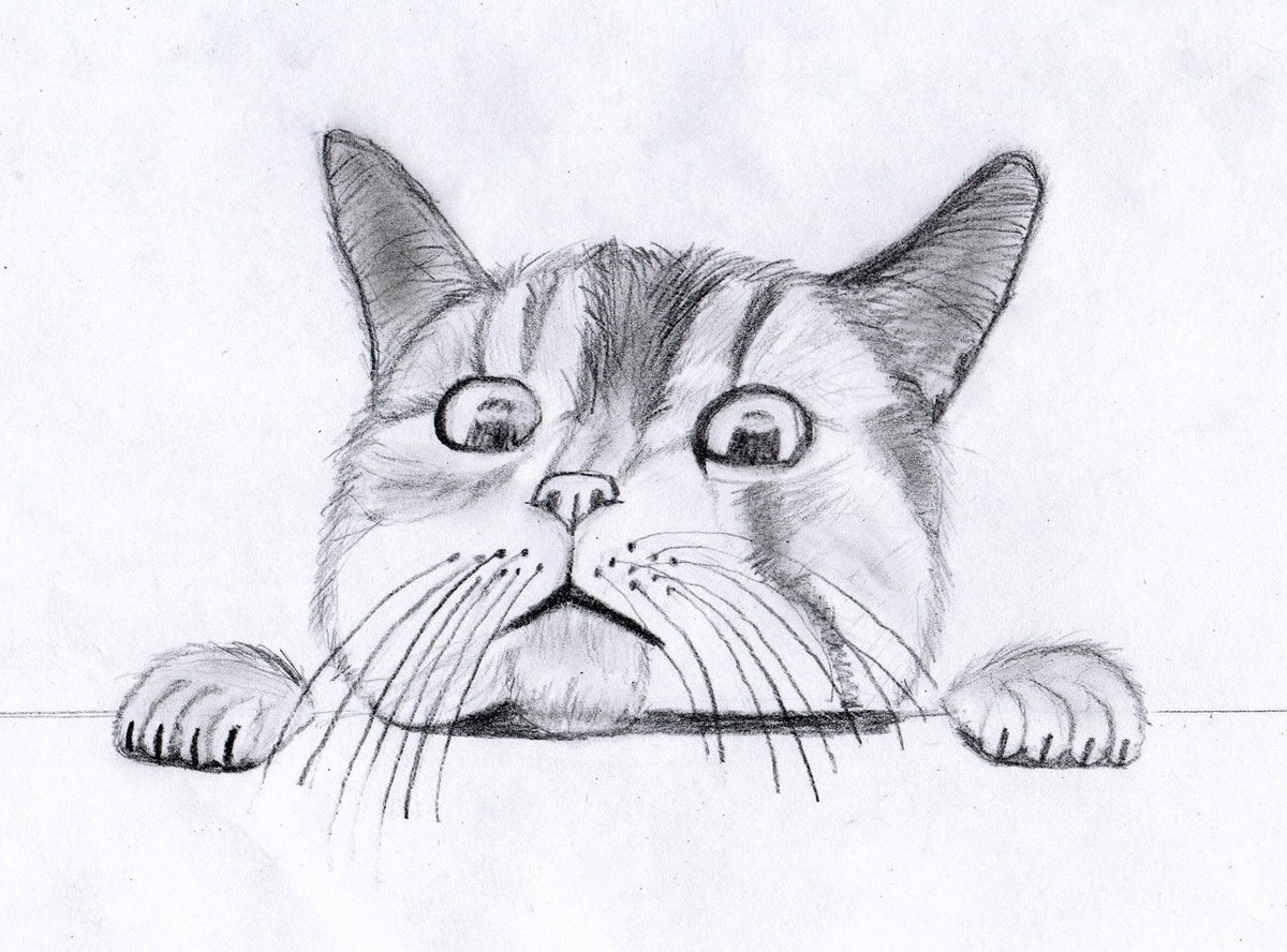 Картинки смешные коты карандашом