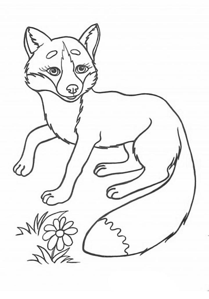 самом картинка лисы печать виды