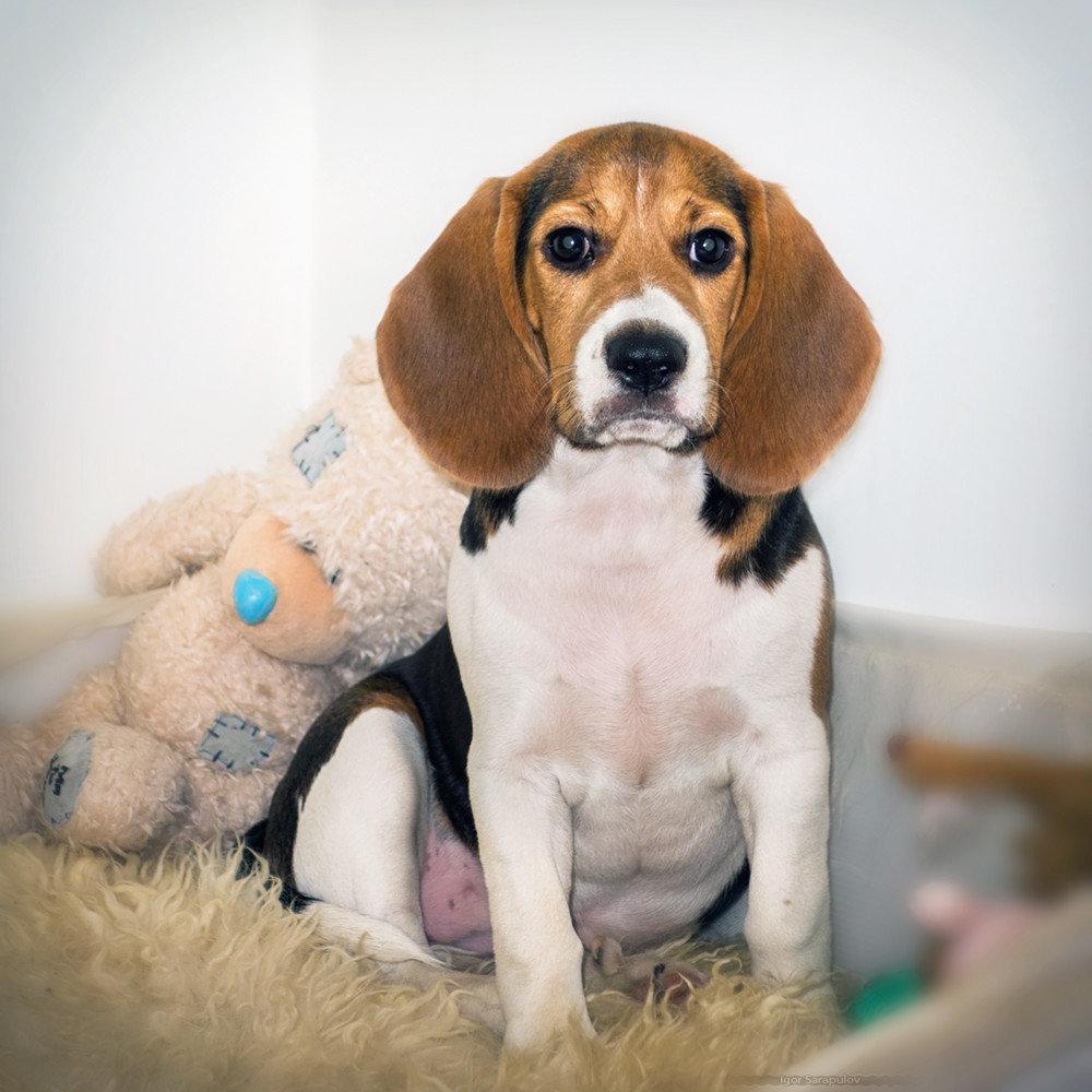 собаки для квартиры с картинками участие коммерческих съемках