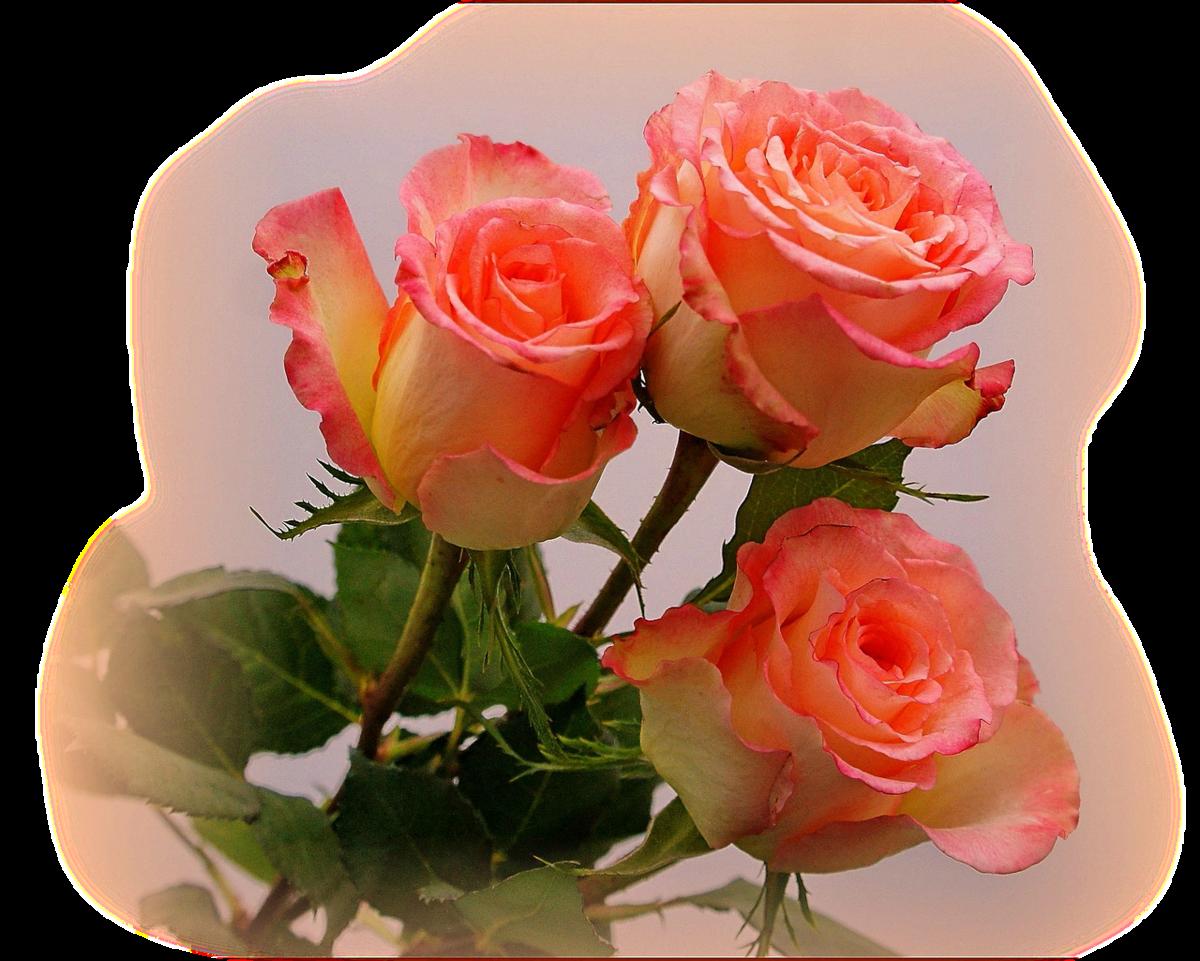 Муз открытка цветы