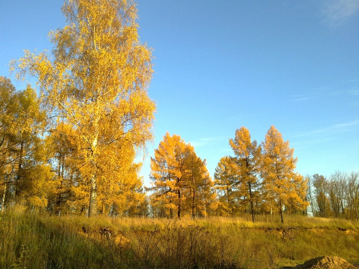 Красивые картинки с деревенской природой и домами фон оранжевая