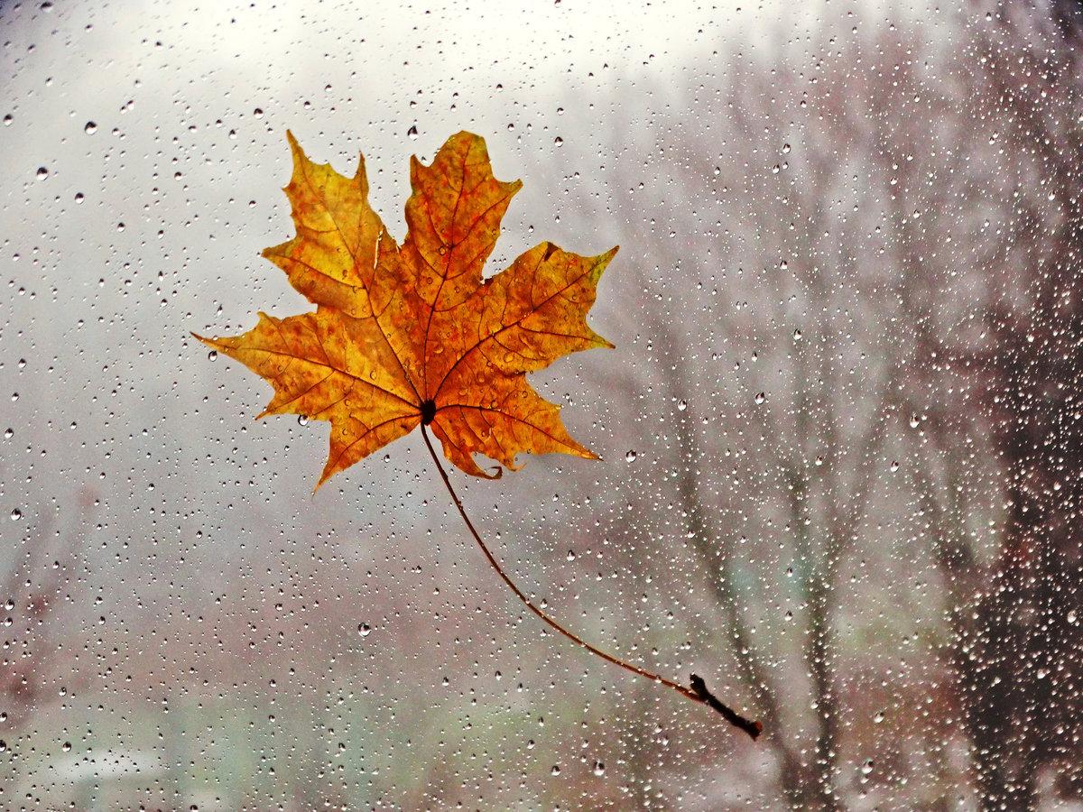 Праздником гаи, открытки дождливой осени