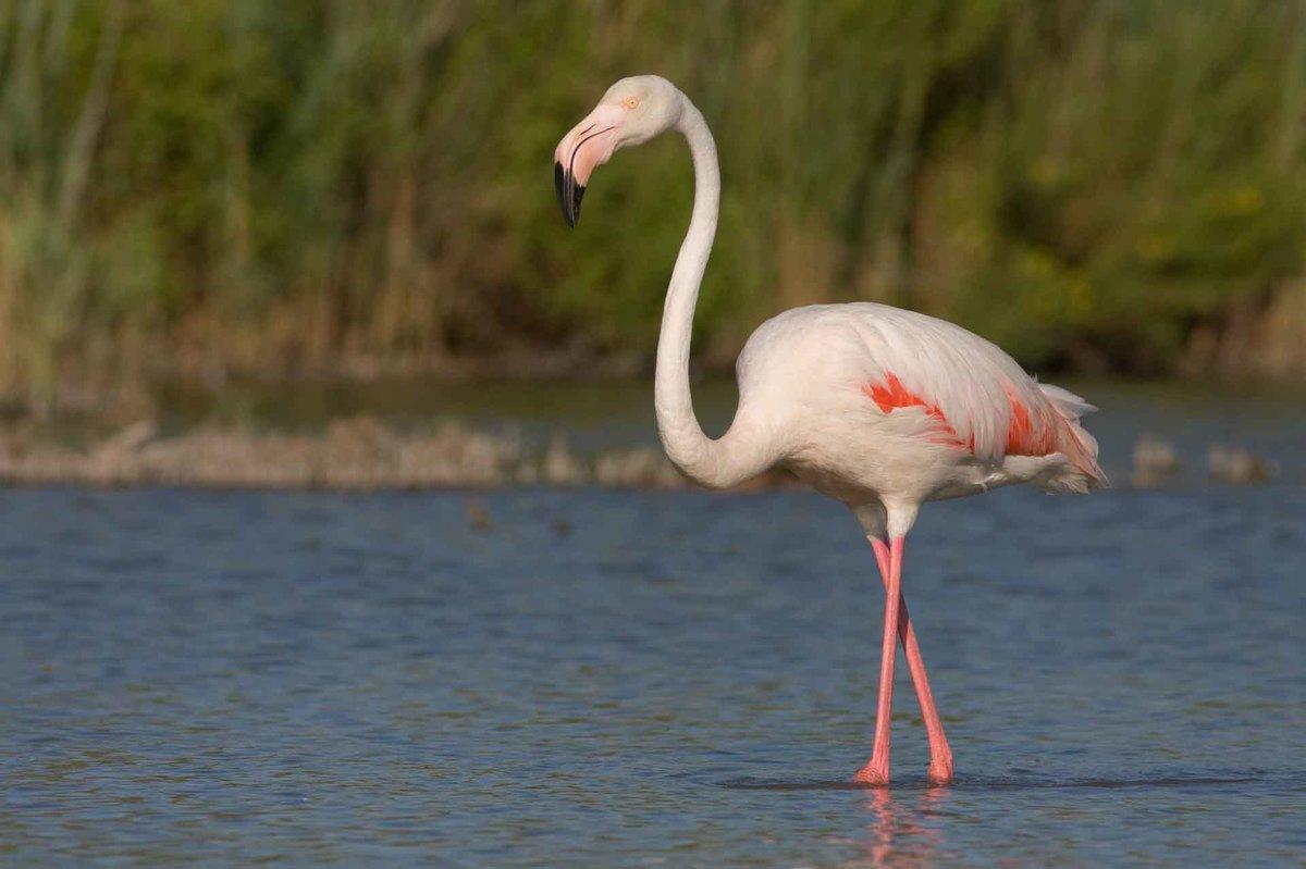 Открытки днем, картинки и фото розового фламинго