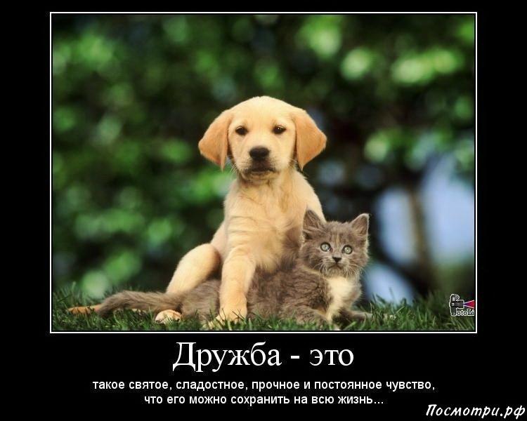 Цитаты к фото с друзьями