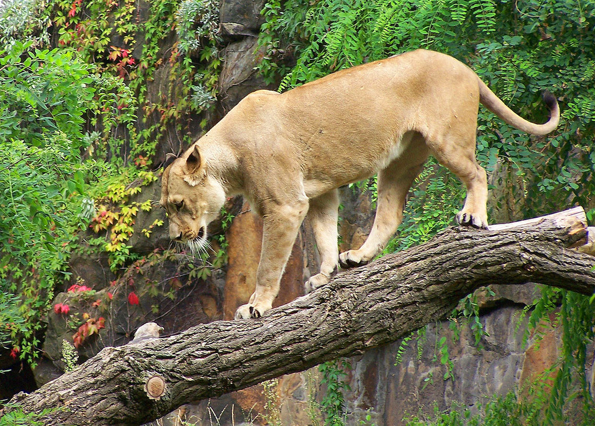 играйте нервах, грация животных фото различия пропорциях дополнительных