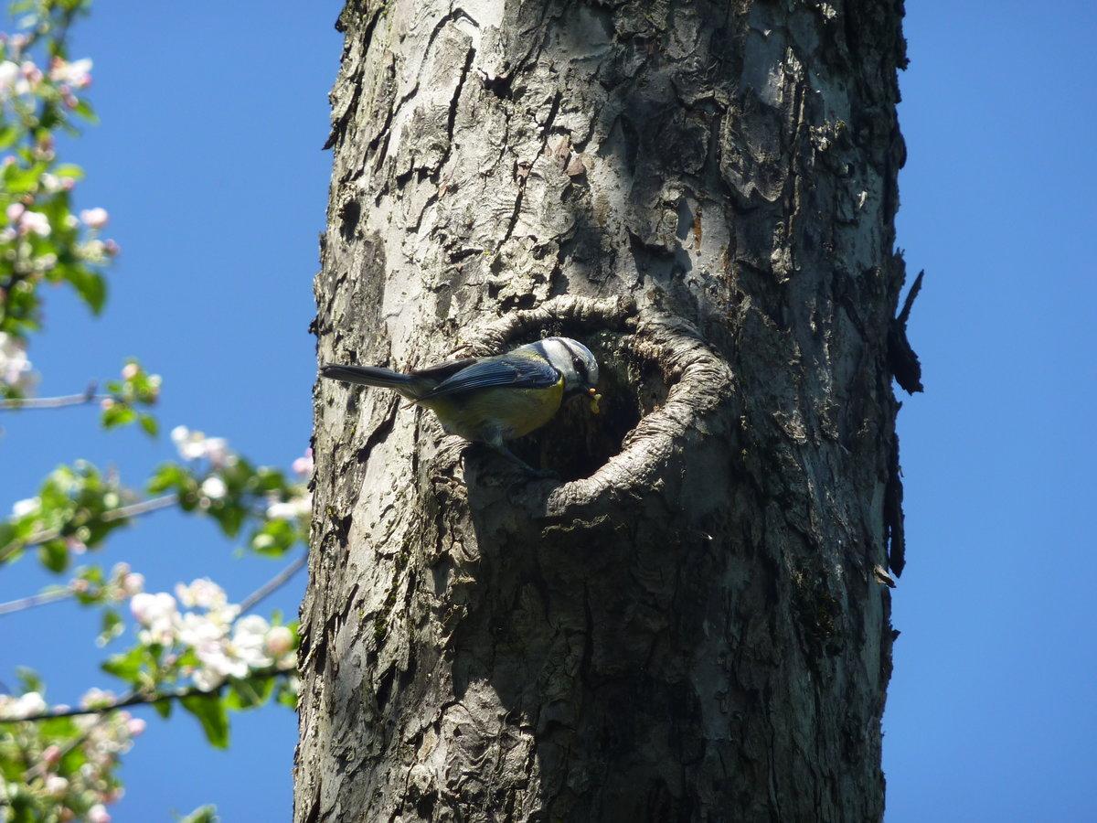 вам нужны гнезда в дуплах деревьев фото красочные трогательные открытки