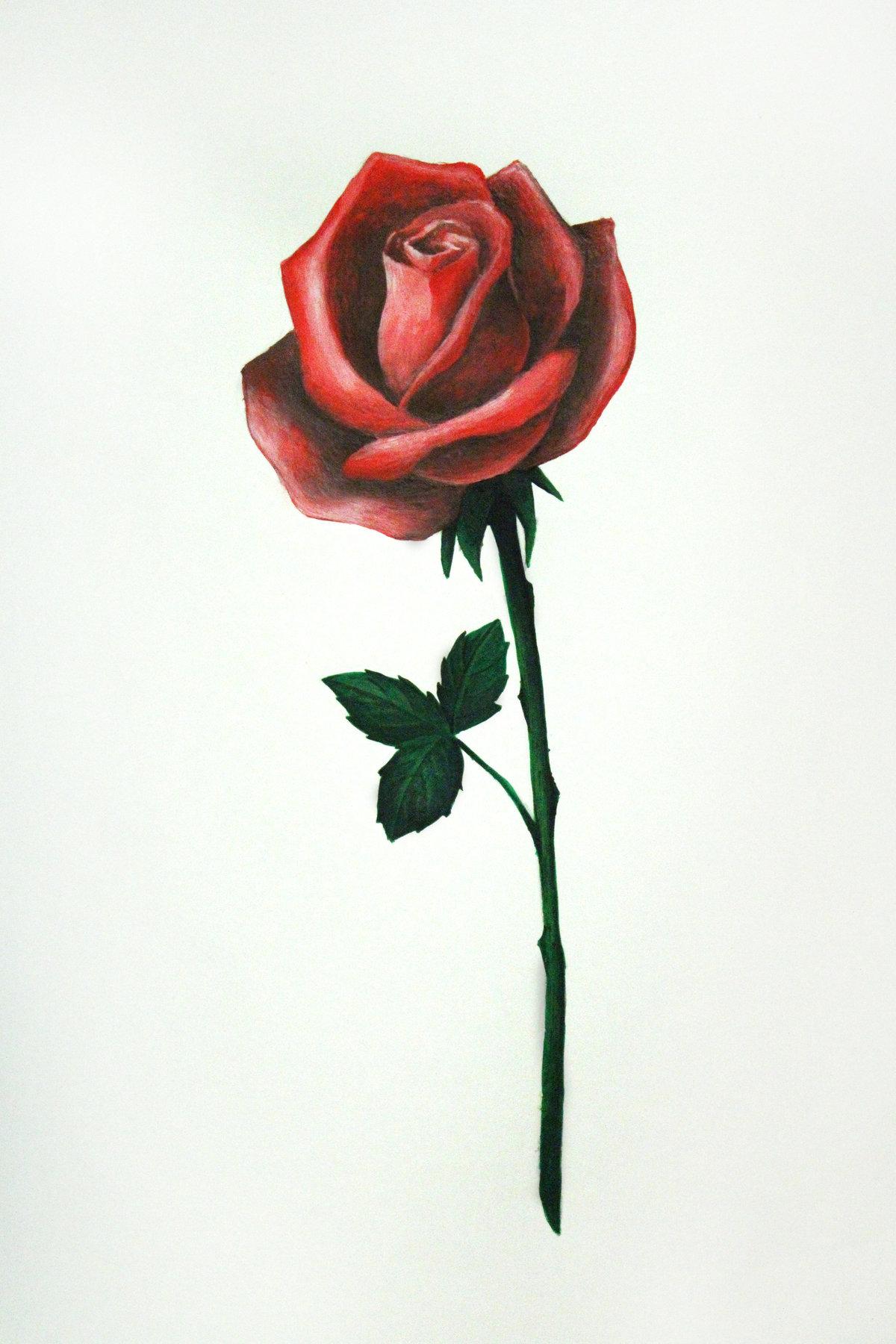 Для, розы рисунки картинки