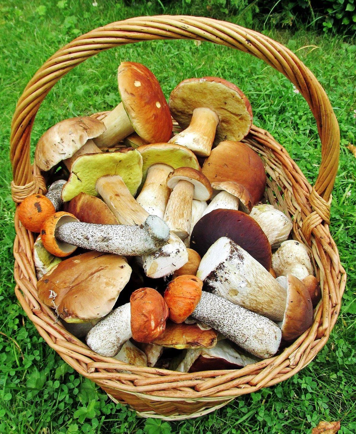 Картинки, картинки лукошко с грибами