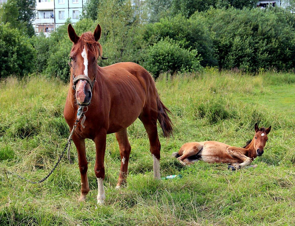 картинки с домашними животными лошадьми участники форума