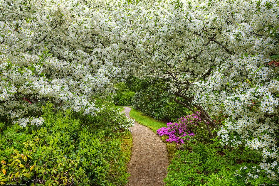 Картинка цветут сады весной, картинки приколы