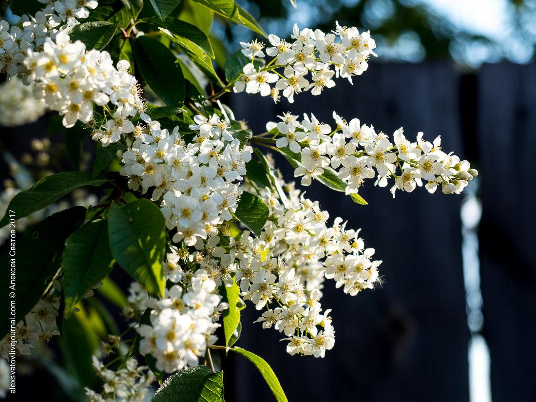 Как цветет имбирь фото ширине крышки