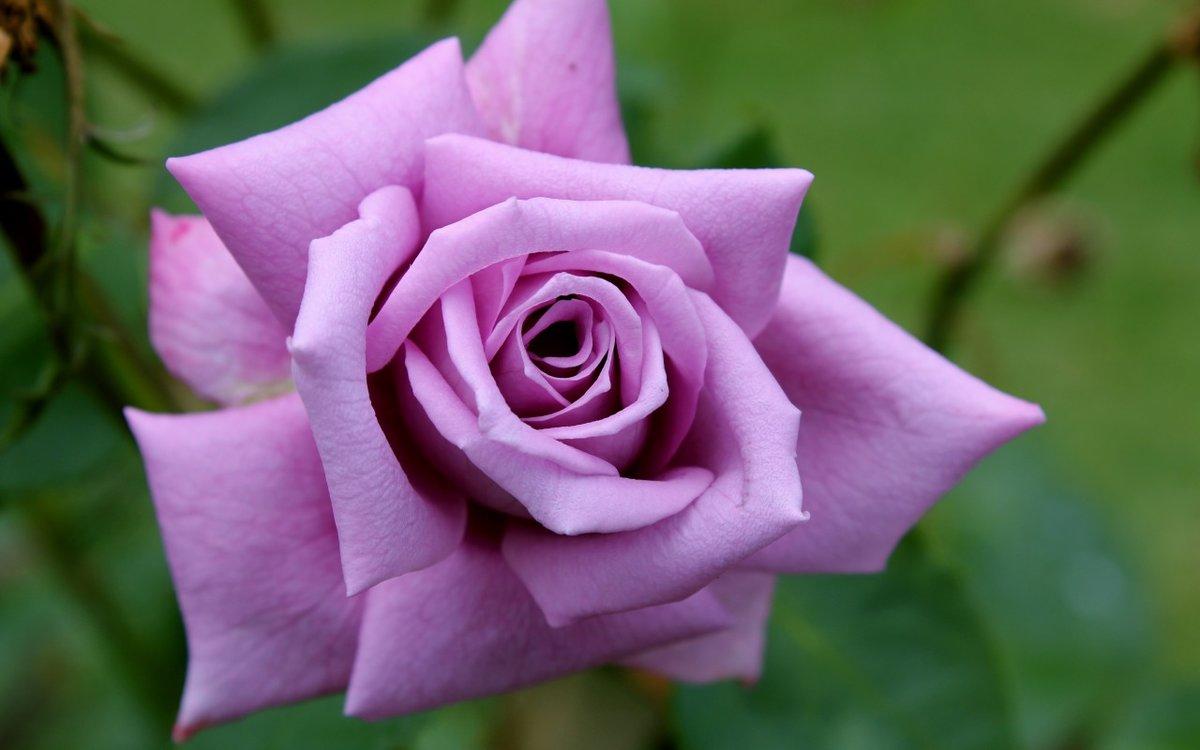 Именами руслан, картинки цветов роз фото