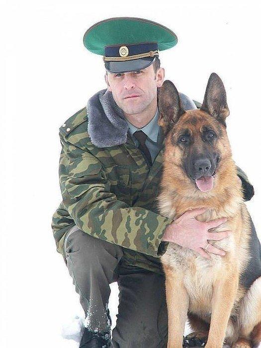 Картинка с пограничной собакой