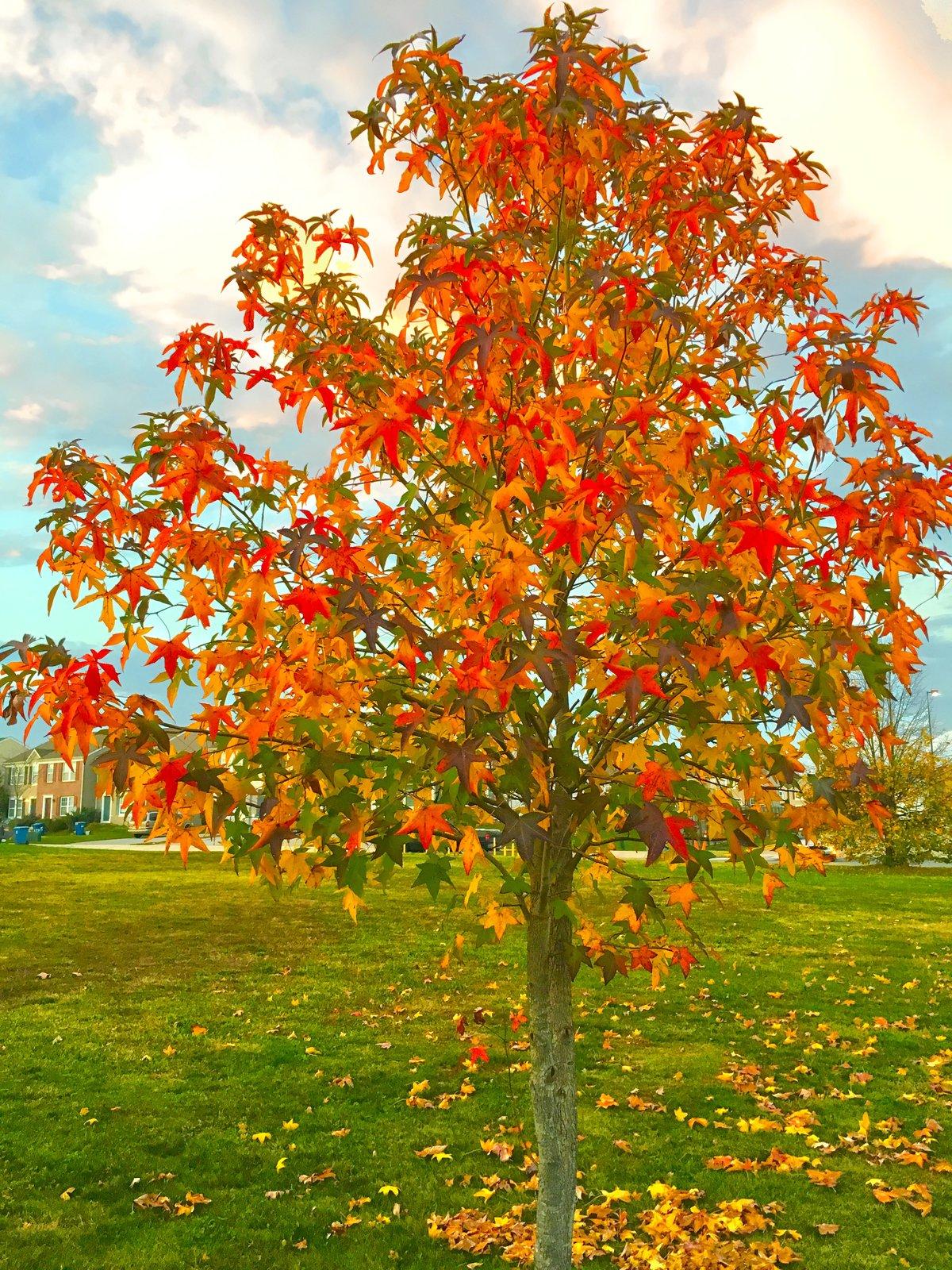 картинки все деревья комментарии содержится информация
