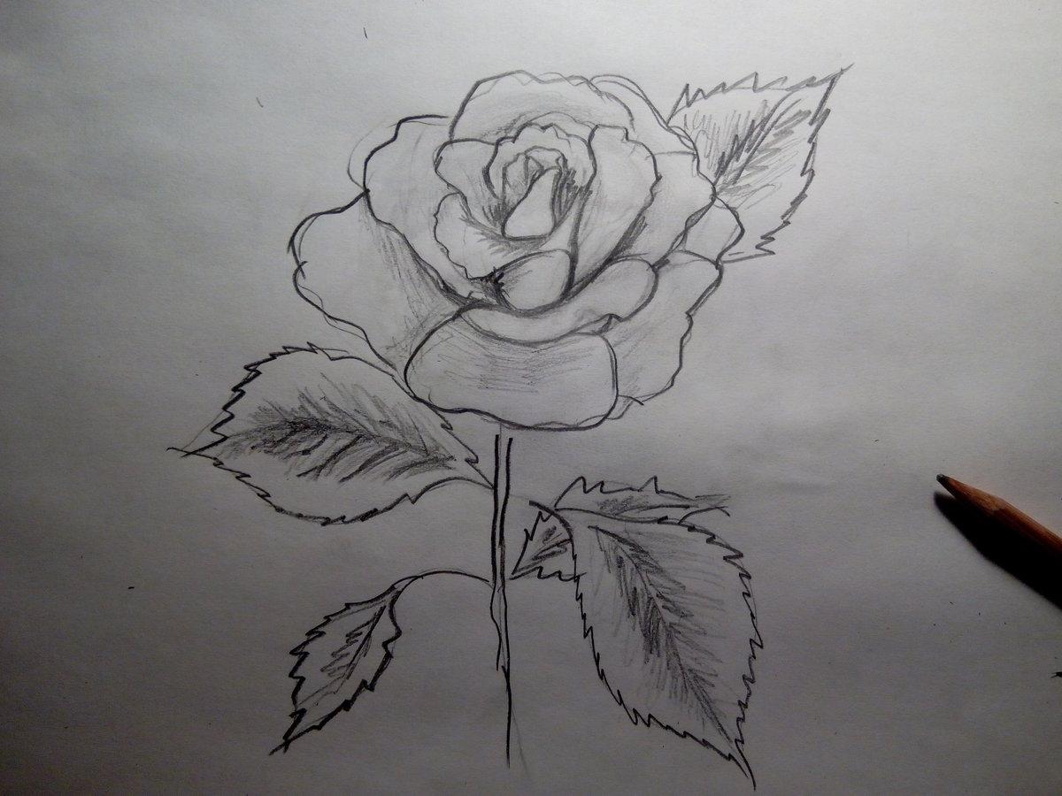 Вип, картинки аниме цветы для срисовки карандашом