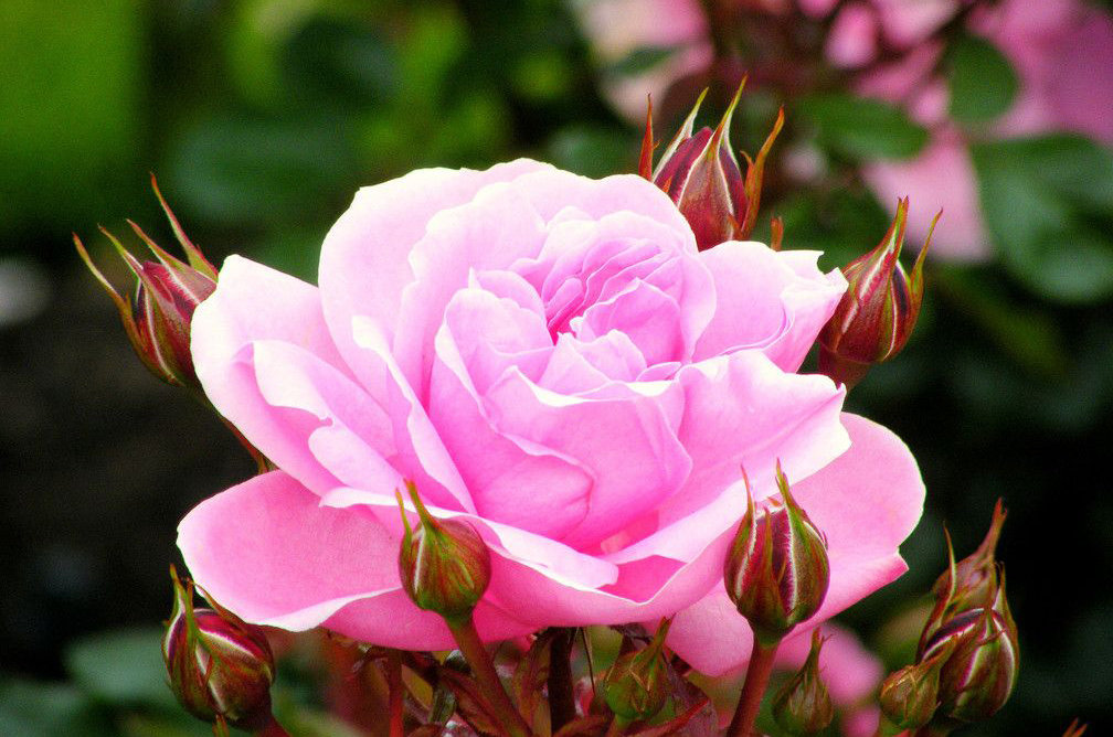 Прекрасные цветы мира фото