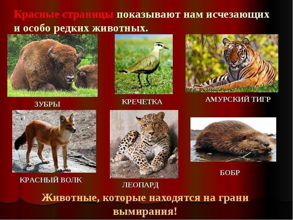Картинки звери красной книге