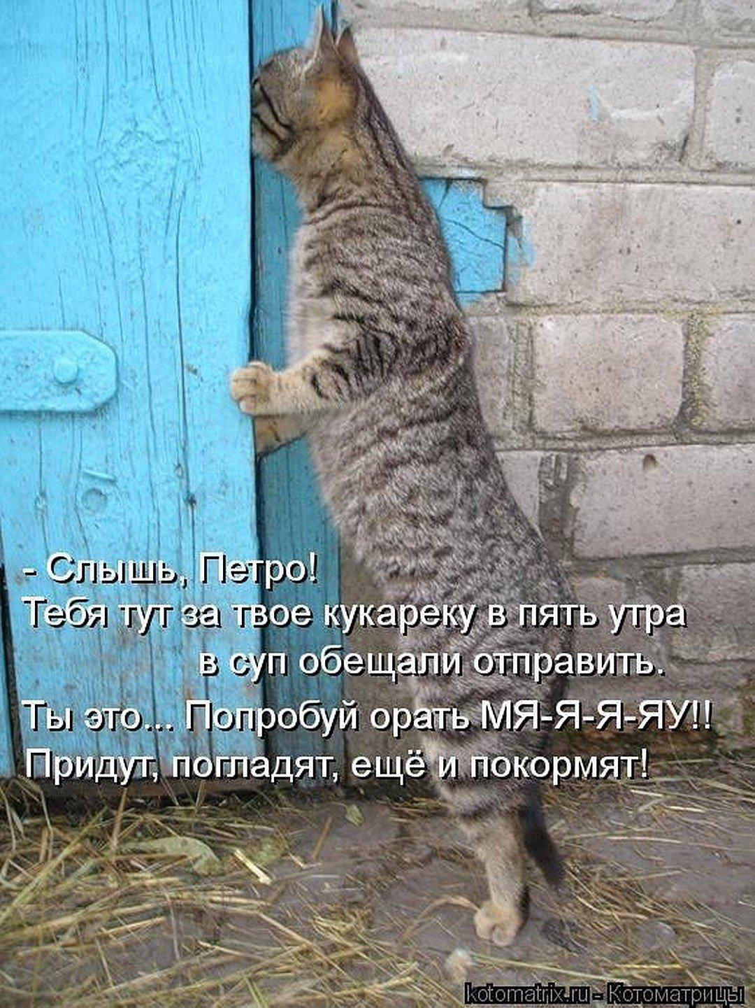 Интересные картинки с кошками и надписям, картинки днем