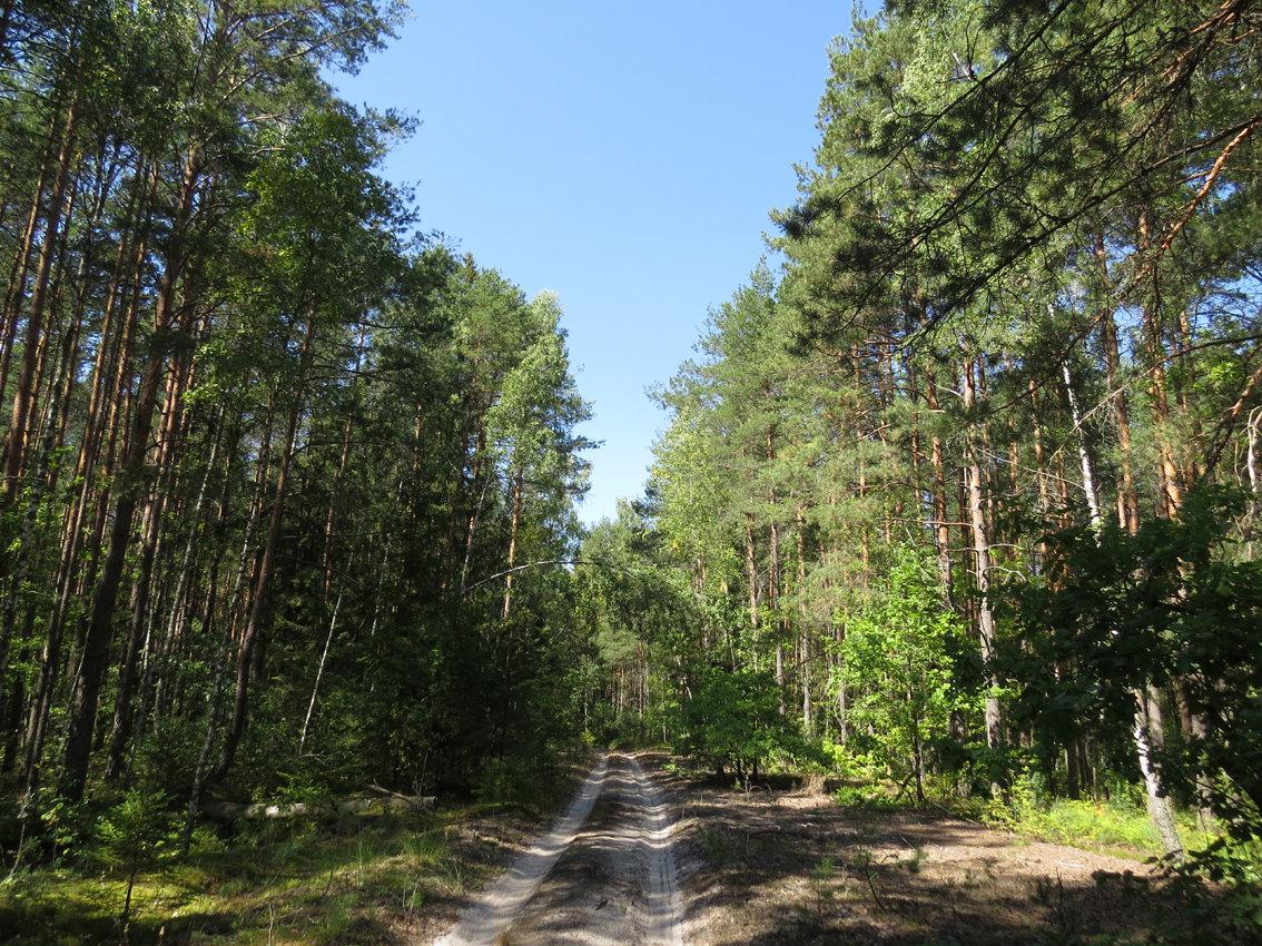 Картинки брянских лесов
