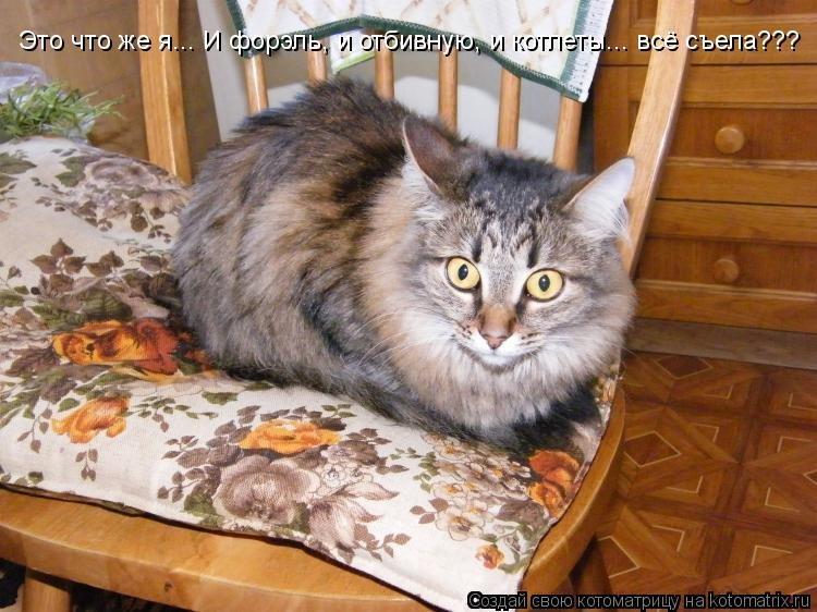 Картинки про котов смешные с надписями грыз провода, любимому