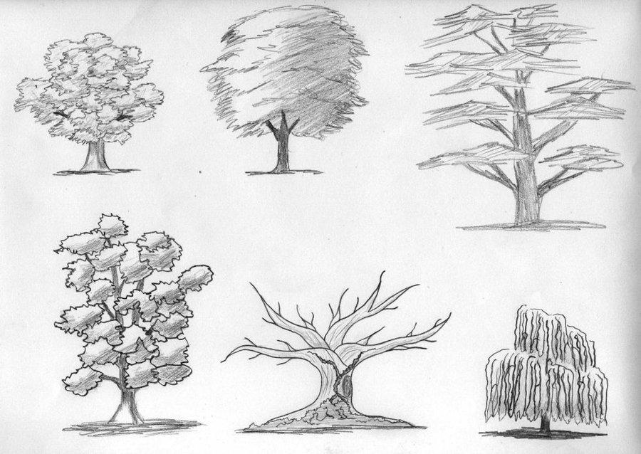дерево картинки поэтапно для словам полицейских