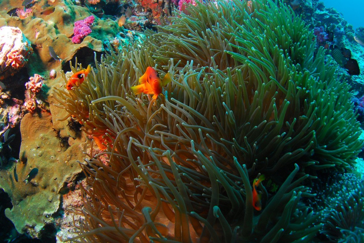 Морские водоросли фотографии
