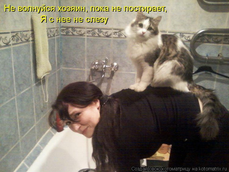 Прикольные картинки прикольные про кошек с надписями до слез, открытка
