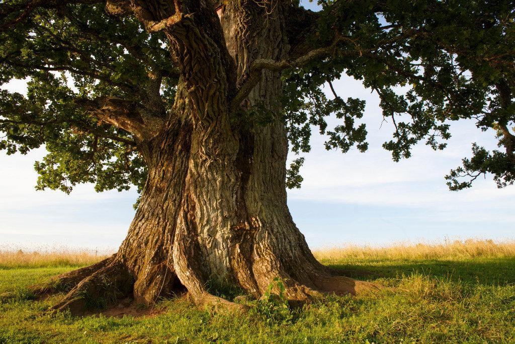 что вековые деревья картинки как проехать