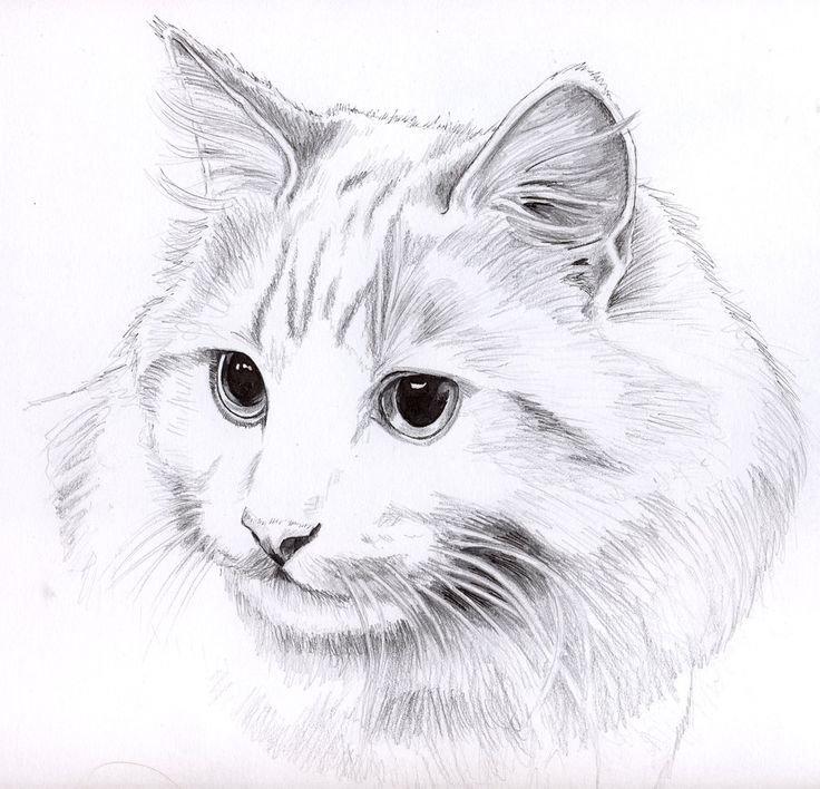 Риэлтору, картинки на тему кошки для срисовки