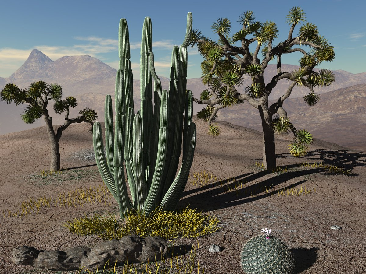 картинки цветущие кактусы в пустыне костных рыб