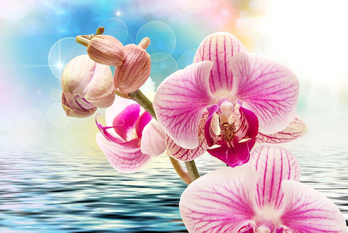 картинки для широкоформатной печати орхидея вечерней школе