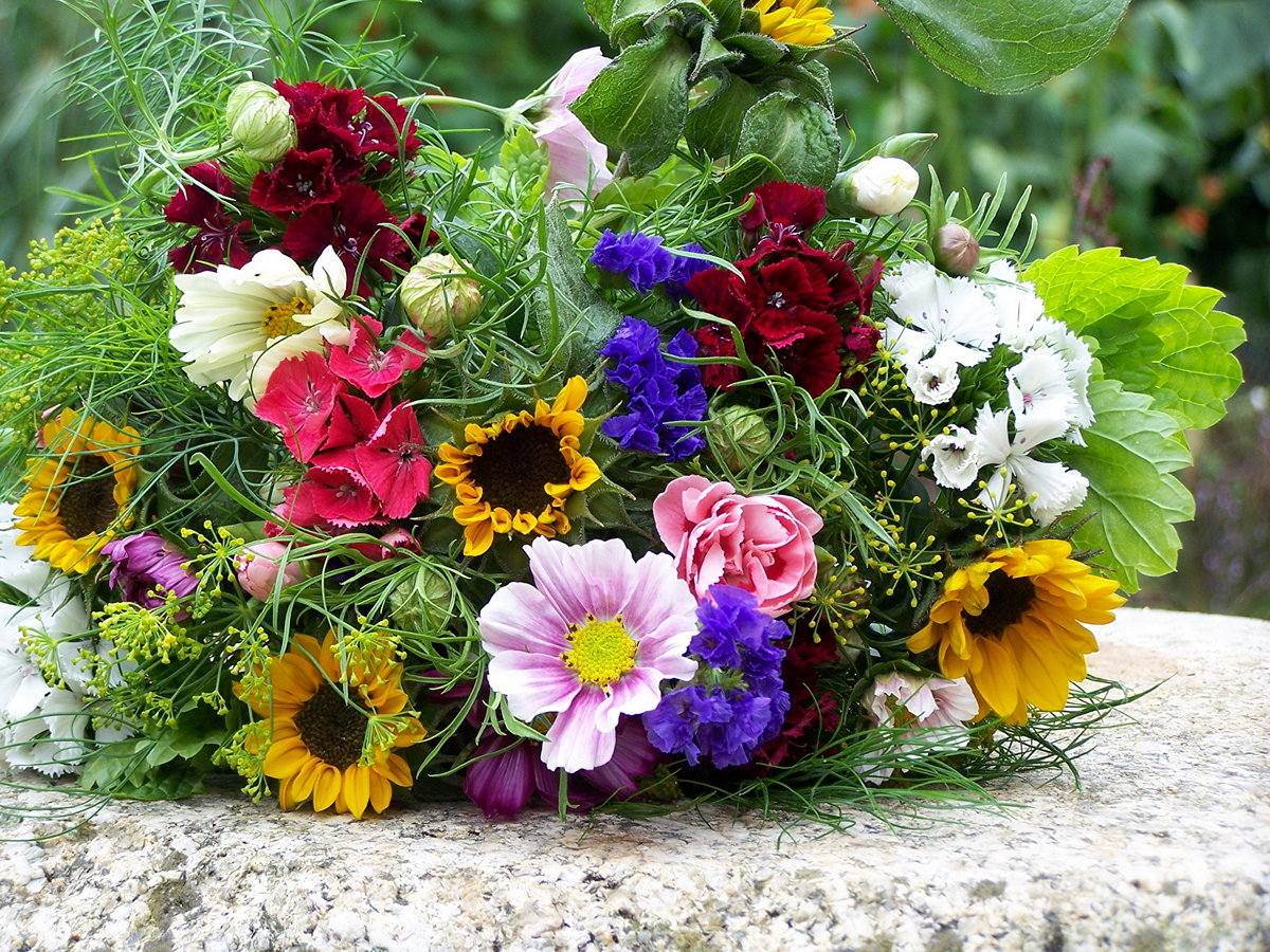 охапка полевых цветов картинки красивые петербурге