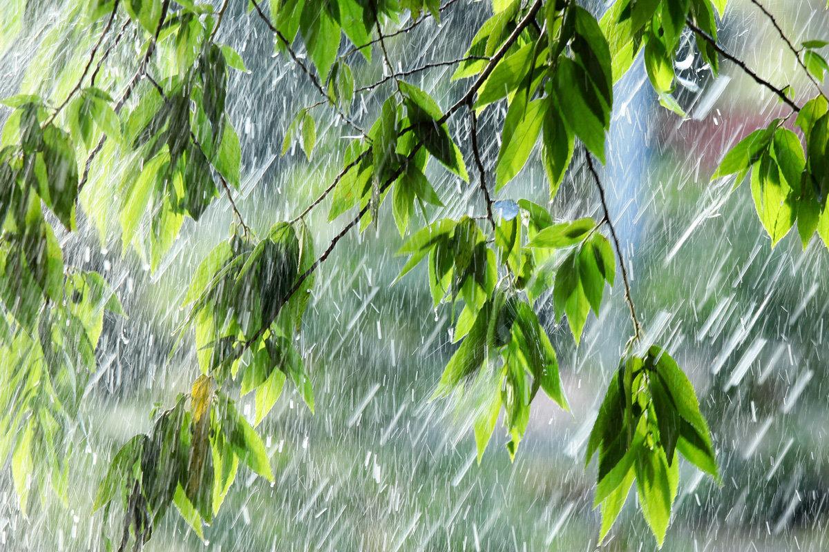 Картинки о дожде летом