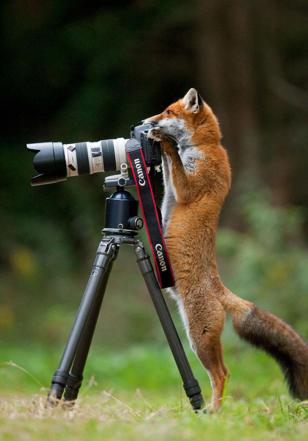 Прикольные картинки фотоаппаратом