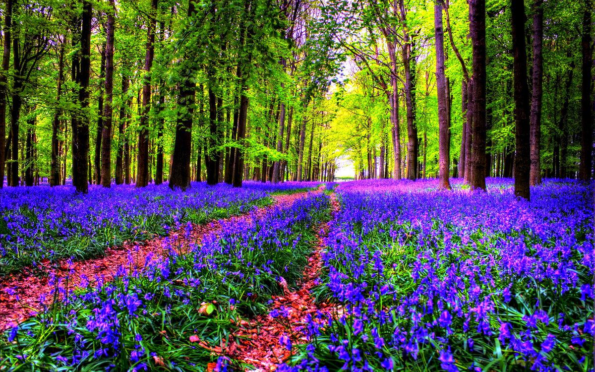 Красота растений картинки
