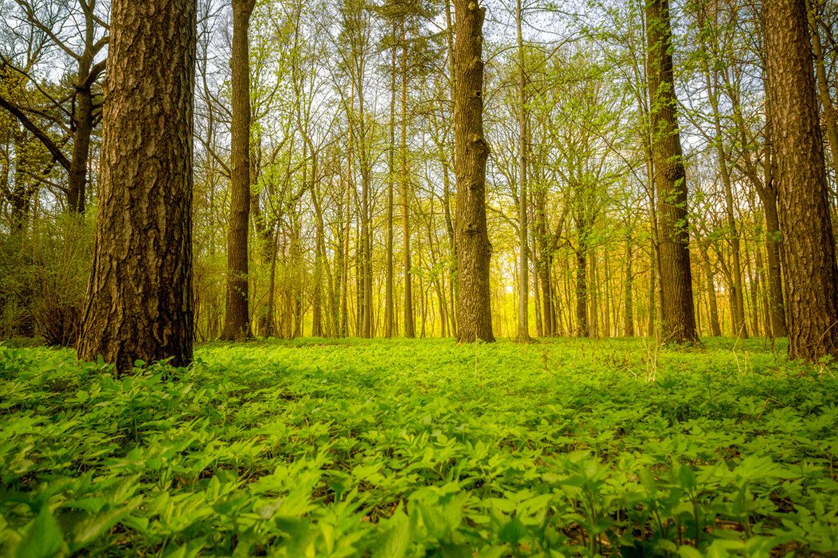 фотографии весеннего леса там только собирали