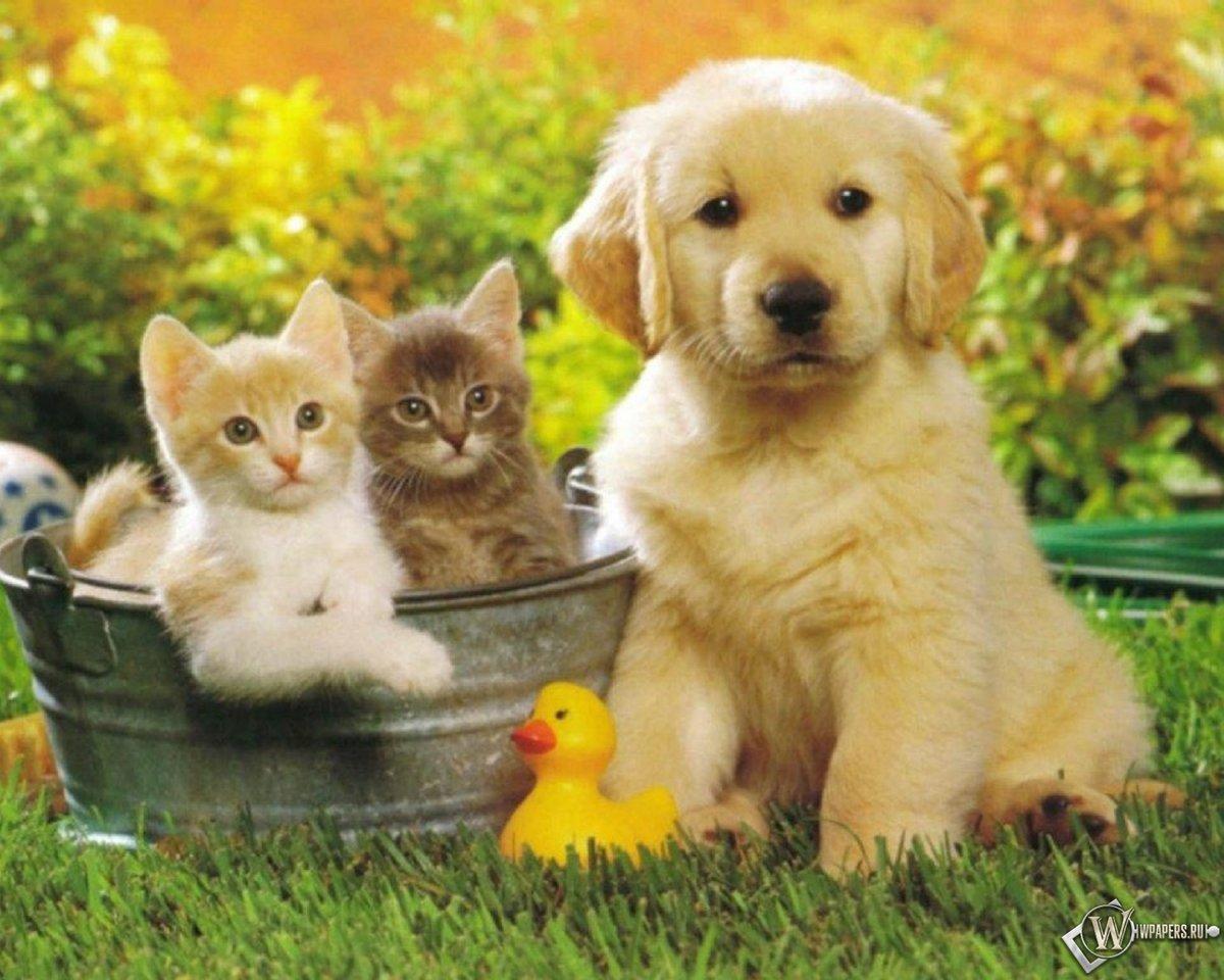 Пожеланием счастья, смешные котики с собаками