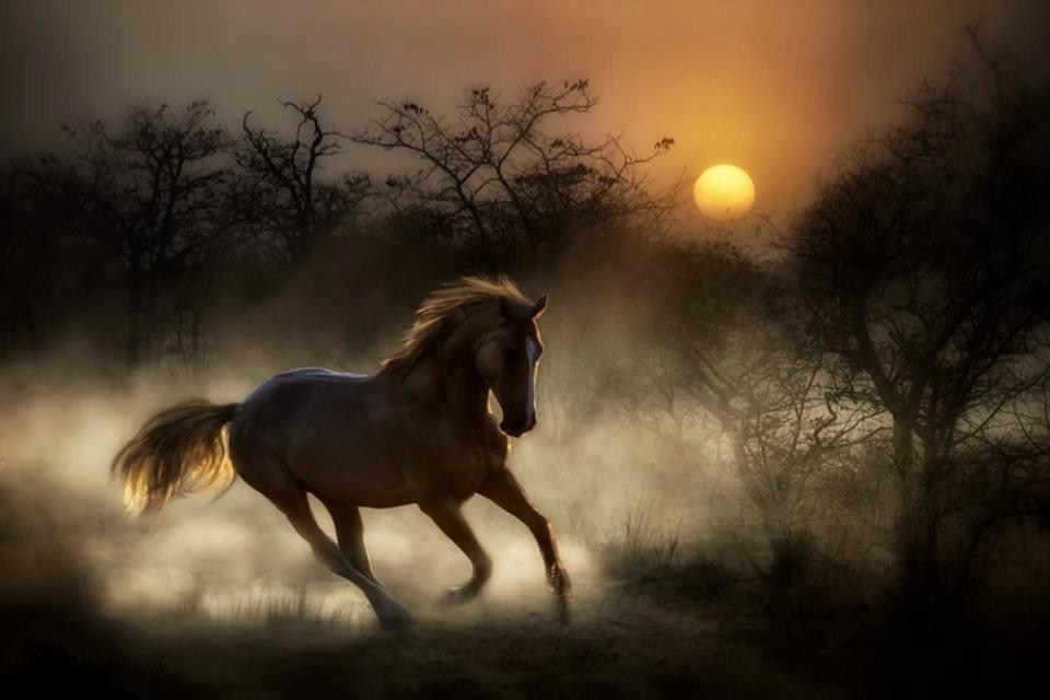Лошадь ночью картинки