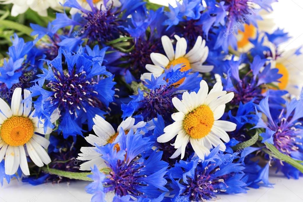рисуем картинки букетов цветов из васильков это