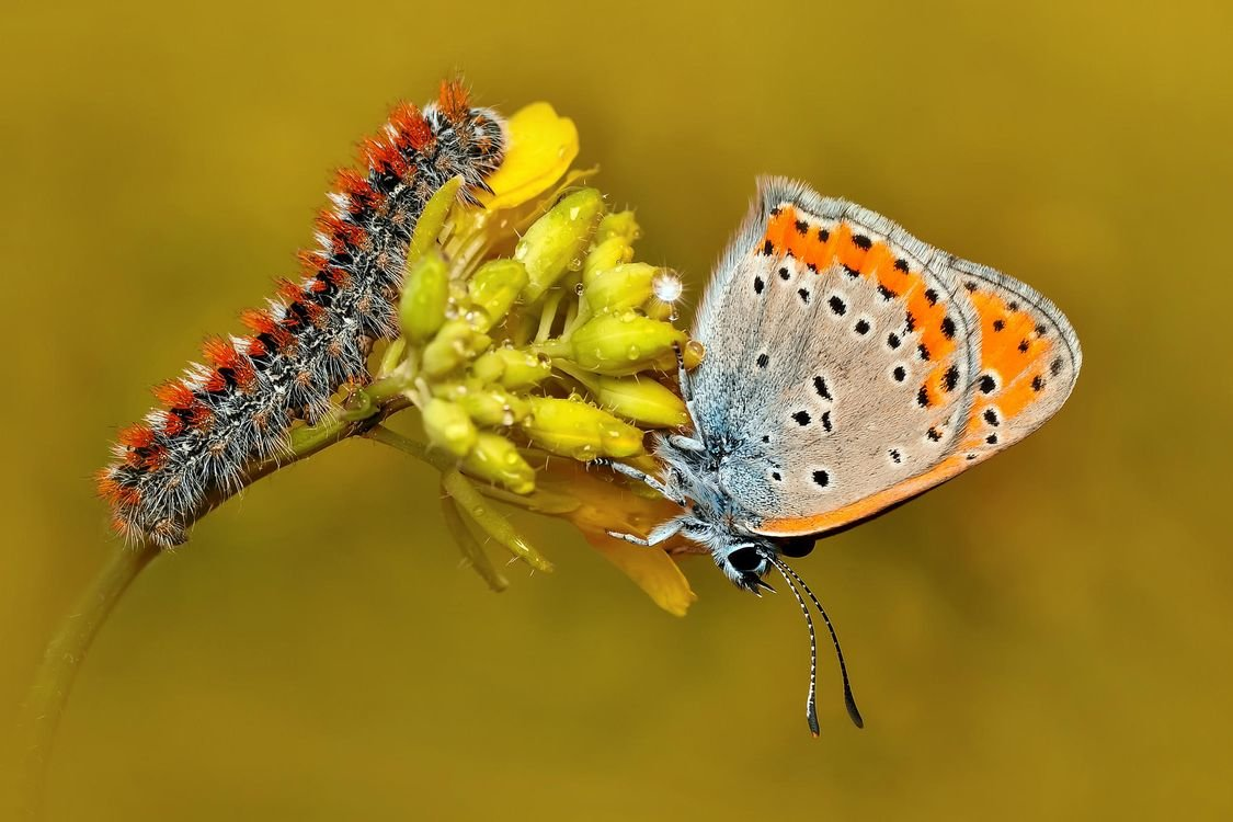 Личинка бабочки в картинках