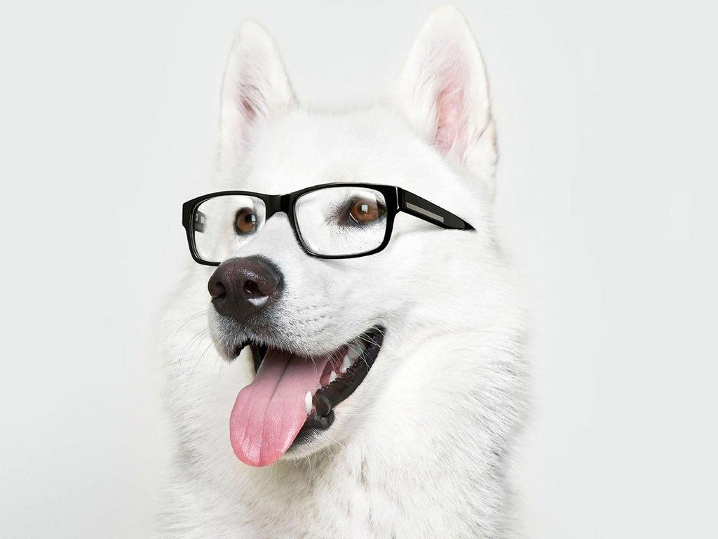 Крутые картинки, картинка с псом в очках